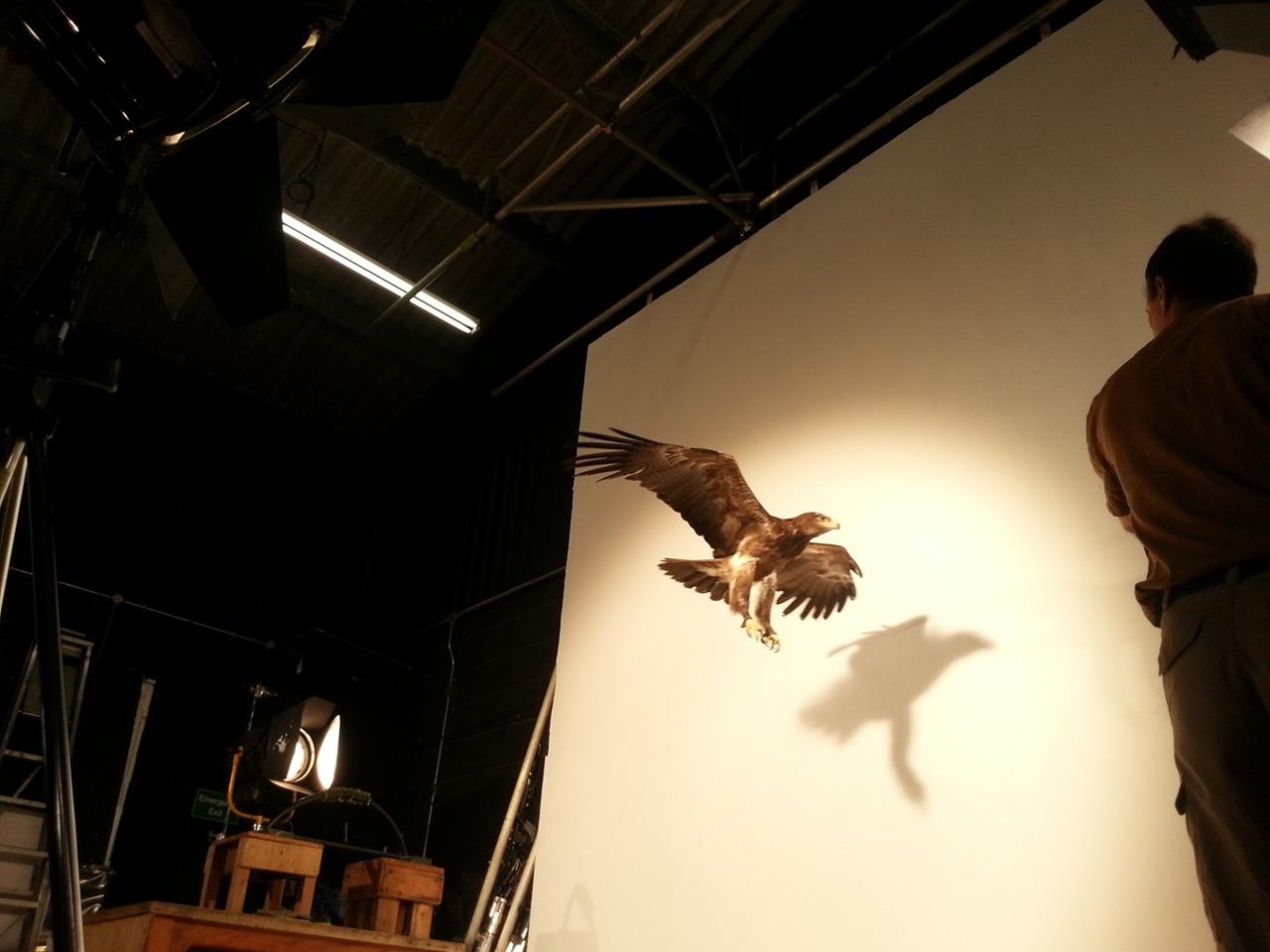 Bird in Flight 02